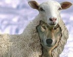sheep-wolf2